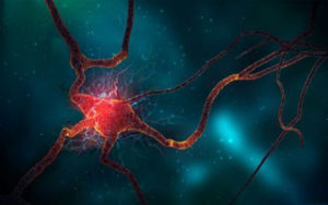 neuron-cell-wide_preview_d7